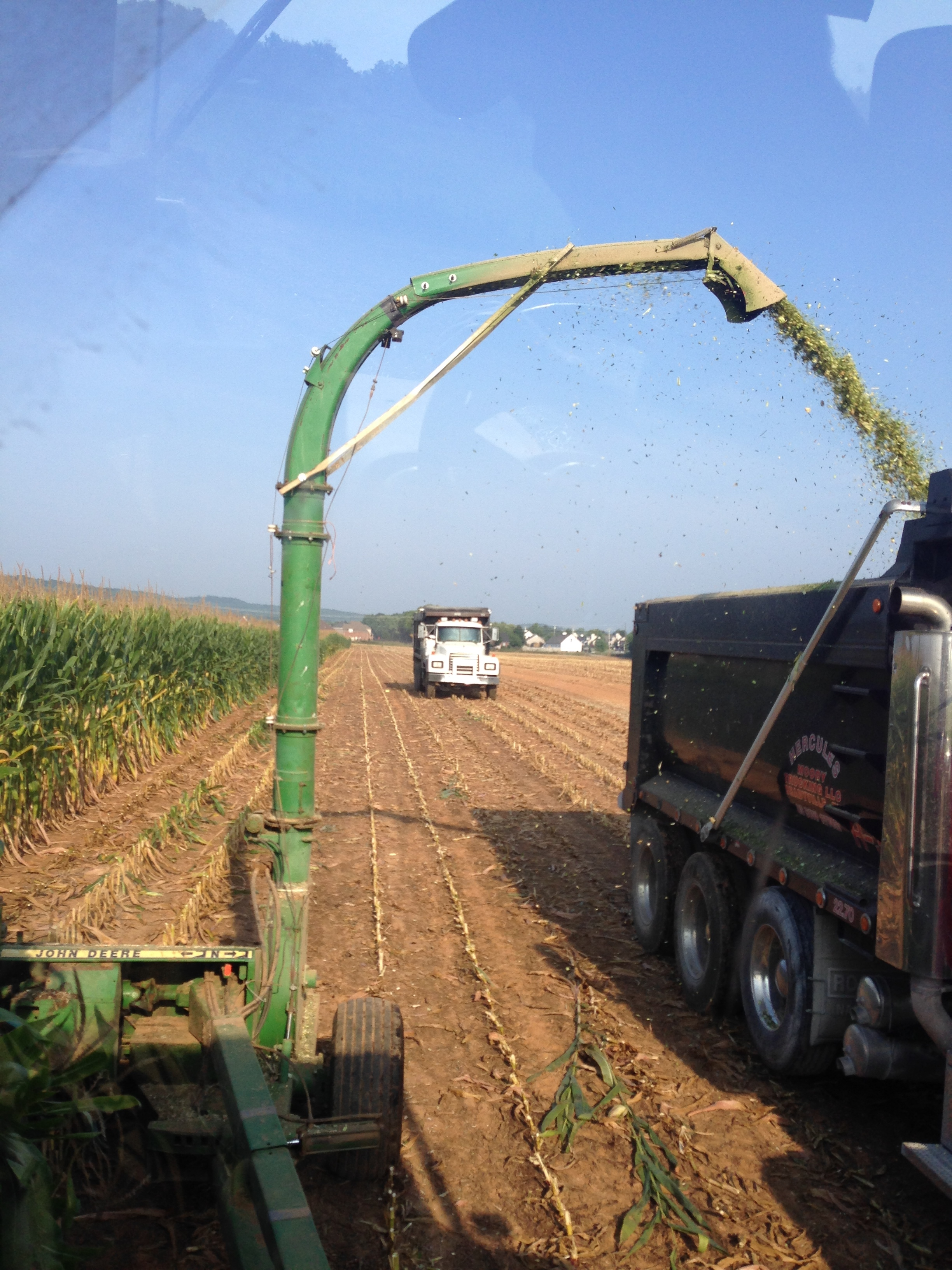 Chopping corn for silage